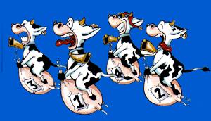 Carrera-de-vacas